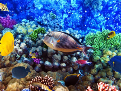 Book your snorkeling trips in Hurghada. and enjoy the best snorkeling trips in Hurghada, Dolphin house Snorkeling Hurghada,....